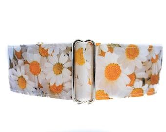 Daisy Martingale Dog Collar, Easter Martingale Collar, Easter Dog Collar, Daisy Dog Collar Martingale Dog Collar Greyhound Floral Martingale
