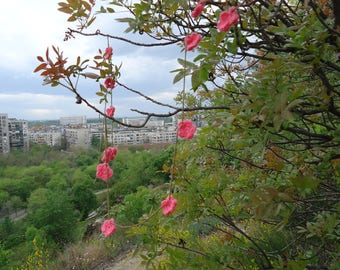 Cherry blossoms garland