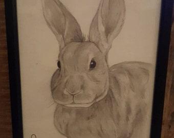 Rabbit Drawing - Framed