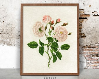 Botanical Rose Print Wall Art, Flower Illustration, French Country Cottage, Shabby Chic Decor, Pink, Printable Poster, Digital Download