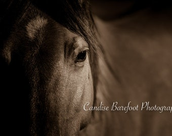 Horse Photography Wall Art Print in 4 Sizes, Ideal for Your Horse Themed Decor