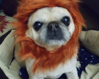 Lion Hat for Cats and Dogs in signature gift bag