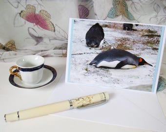 Penguin card handmade A6 blank inside C010