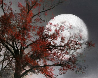 Black White Red Tree Moon Wall Art Photography Modern Red Artwork Home Decor Matted Picture
