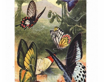 original Antique Natural History Entomological & Botnaical Print – Butterflies