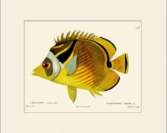 Vintage Fish Print #173, Art Print with Mat, Note Card, Natural History, Beach House Wall Art, Nautical Art, Sea Life Prints, Wall Decor