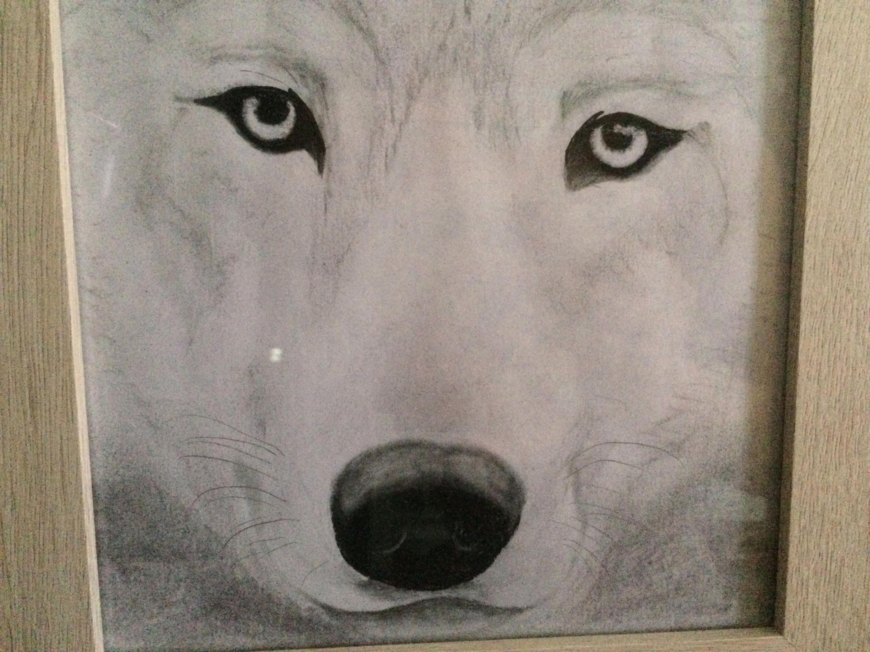 Lobo Original enmarcado dibujo