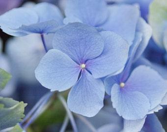 Blue Hydrangea Flower Photograph, Botanical Print, Farmhouse Wall Art, Pastel Blue Flowers, Floral Wall Decor, Hydrangea Print, Feminine