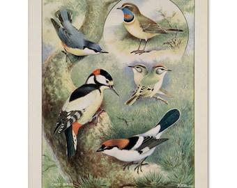 A3 Bird Print Wall Art - Colourful Gems (Print #2)