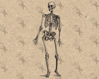 Vintage retro drawing Human Skeleton image Instant Download Digital printable clipart graphic Burlap Fabric Transfer Iron On Decor  HQ300dpi
