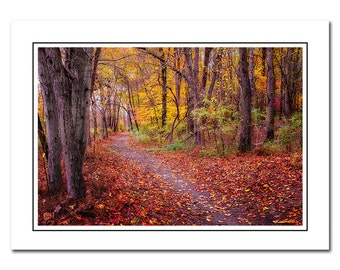 Autumn Trail Note Card with Envelope, Scenic Fall colors, Blank inside, Greeting Card, Red, Yellow, Thank You Card