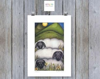 3 Sheep A3 Print