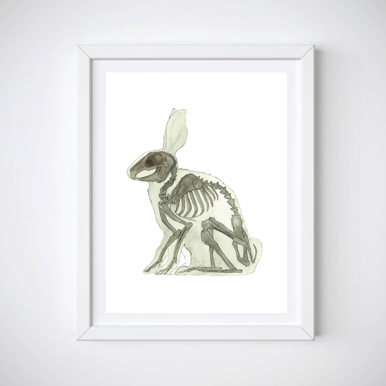 Tierarzt-Geschenk Hase Druck Tier Anatomie Kaninchen