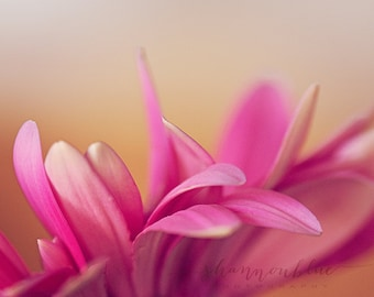 flower photography, botanical photography, pink flower, abstract, petals, feminine, still life, pink, gold / pink touch / 8x10 fine art