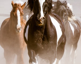 Raising Some Dust! Sombrero Horse Drive - 12x16 Gallery Wrapped Canvas Print