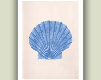 Seashell Scallop  Print, 5x7  Vintage Pecten maximus sea shell print,  Marine Wall Decor, Nautical art, Oceanic living