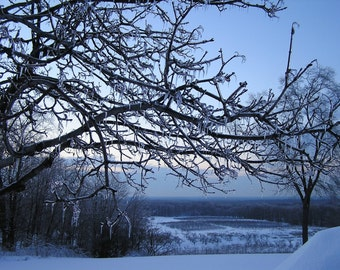 Ice Orchard in Blue 5x7 Winter Nature Photograph Snowy Field Landscape