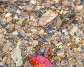 Red Leaf Among the Rocky River Bed Fine Art Print