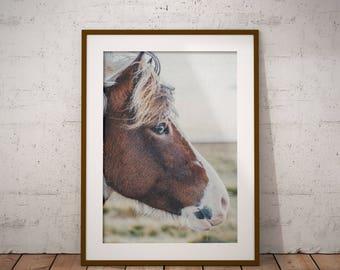 Horse Print, Horse Eye Photo, Color Photography, Digital Download, Printable Large Poster, Photography, Horse Decor, Modern Horse, Printable