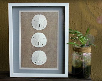 "Sand Dollar Wall Art White Shadow Box 12""X15"" Frame Burlap and Blue Border Beach Coastal Home House Warming Gift"