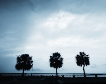 Palmetto Tree, Downtown Charleston SC, Charleston Photography, Chucktown, Charleston Art, Charleston SC Photos