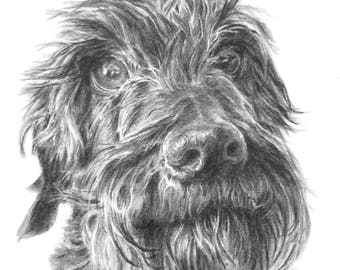 Pet portrait - Pencil drawing of dog