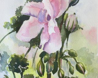 Original watercolour painting Geraniums