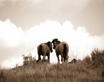 """Horse print,Wild Horse Photo, Horse Photography .Title """" Only you and me"""""""