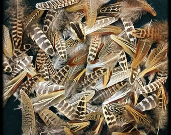 """25 - 2"""" to 5"""" pheasant feathers, assortment short rooster and hen pheasant feathers, Ringneck pheasant feathers, feather variety"""