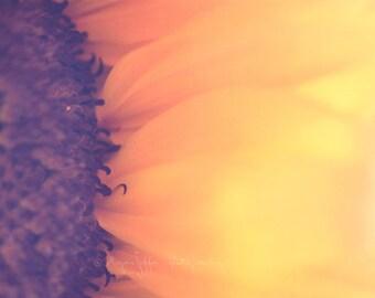 sunflower photograph, flower photography, sunflower art print, yellow decor, yellow nursery wall art, nature photo, orange girls room