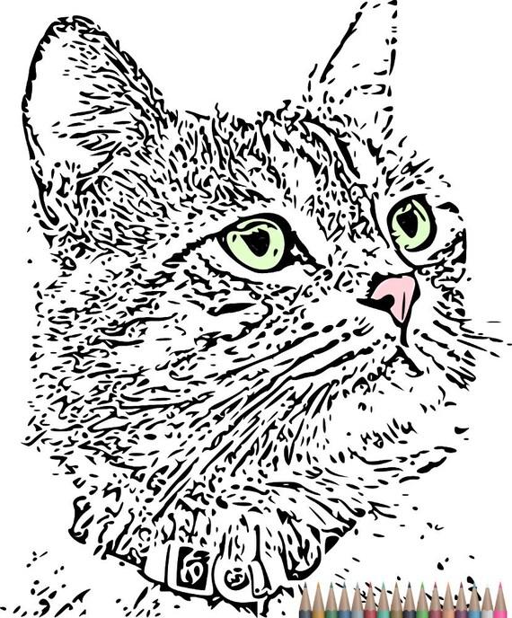 Adultos para colorear. Páginas de colorear de gato instante