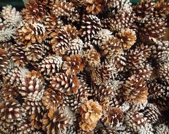 Real Pine Cones (Scots Pine) 100% Natural & Organic Craft Supplies Christmas Wreaths Wedding or Party Decor,Children's Crafts,Pot Pourri