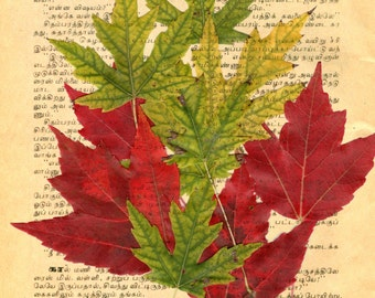 Book Paper Art Leaf Art Art on Vintage Book Page