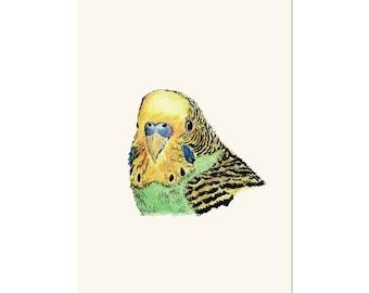 Parakeet, bird art print 5x7 Animal Art Watercolor Painting Budgie Bird, illustration, home decor, Nursery, wall art,  postcard