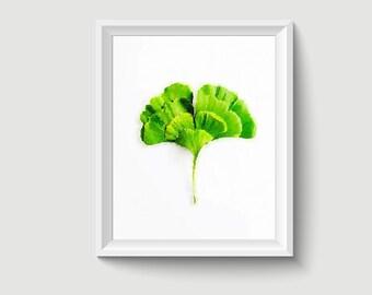 Ginkgo Leaf Painting Postcard Poster Art Print Q381