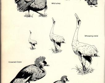 Ready-To-Use Bird Illustrations + Bob Giuliani + Dover Publications + 1996 + Vintage Craft Book