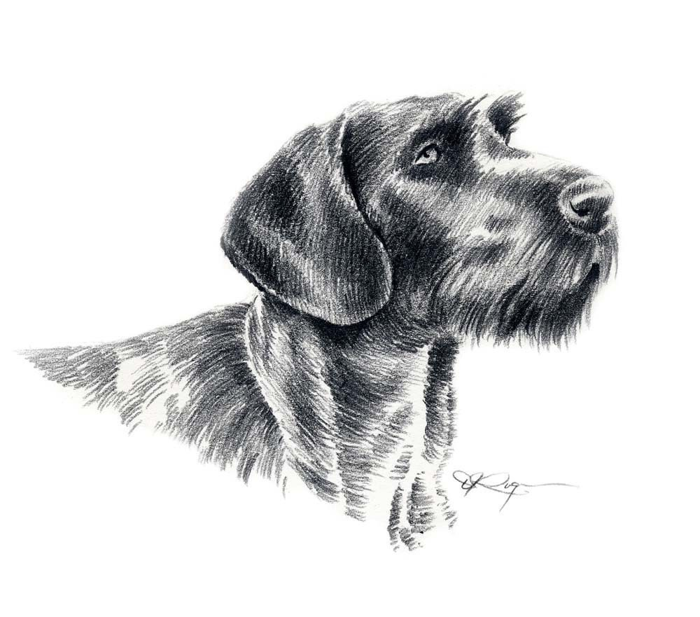 GERMAN WIREHAIRED POINTER Dog Art Print Signed by Artist D J
