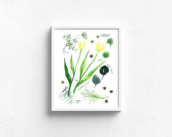 Watercolor Art Giclee Print - Botanical Rainbow series in Green