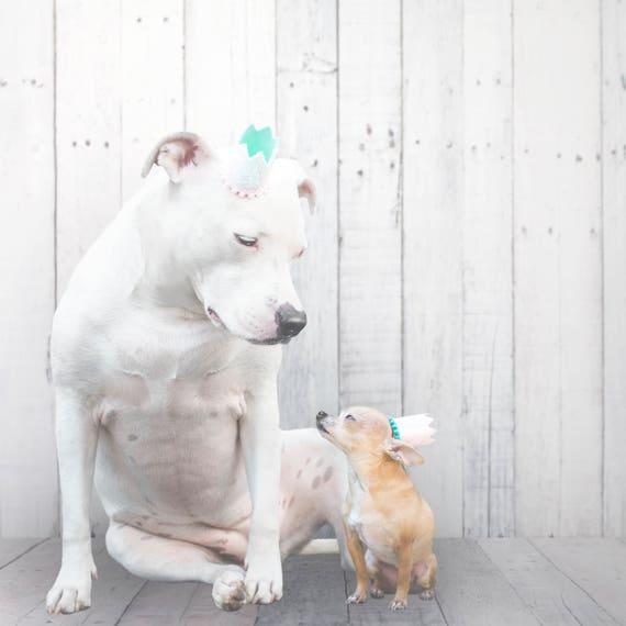 Pet Birthday Hat    Animal Birthday Hat    Dog Party Hat    Dog Crown    Dog Birthday Crown    Pet Party Hat