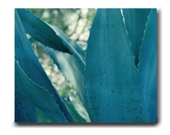 Large wall art sacculent wall art, Agave wall art canvas, blue green wall art teal turquoise wall decor, modern living room bathroom bedroom