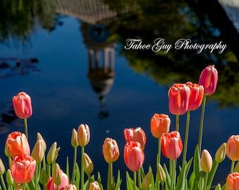 Photograph: Tulip Pond (5500 x 3700)