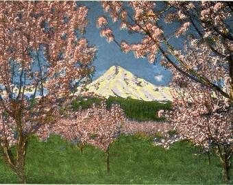 Mt. Hood at Apple Blossom Time Oregon Vintage Postcard (unused)