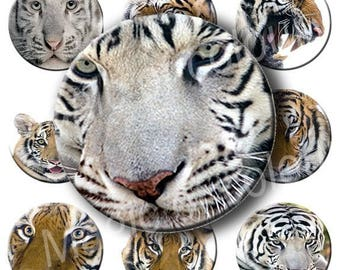 Digital Collage of India Tiger Illustrations - 63  1x1 Inch Circles JPG images - Digital  Collage Sheet