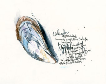 Bivalve mussel  watercolor print with text