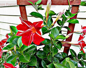 SALE Digital Download Red and White Striped Mandevilla flower - Digitally Enhanced Art Photo File of Mandevilla vine