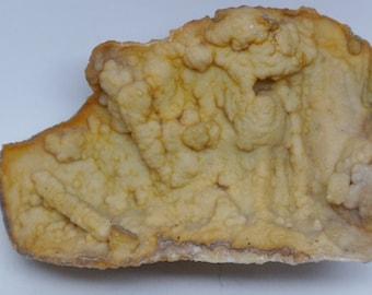 Fossil Coral Specimen - Agatized Fossil Specimen - Coral Geode - Coral Specimen