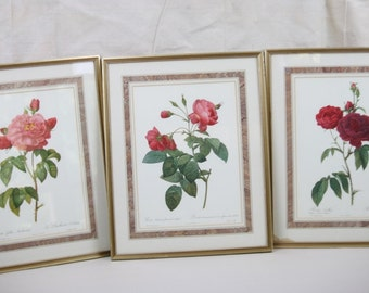 3 Framed Prints English Roses by PJ Redoute Whittington Collection England Vntge