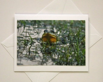 Stanley Park Frog -Blank Photo Greeting Card