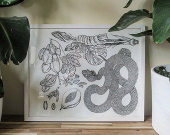 Archival Snake Print 'Dead-Gentle'. Natural History, Species of Central America Print.