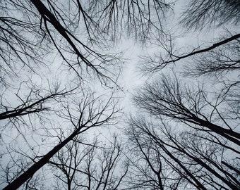 Tall Tree Photo Print